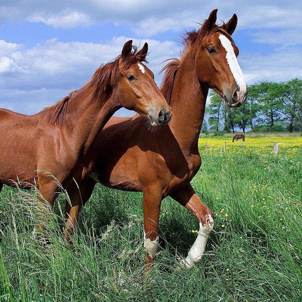 Foto paard met veulen 16