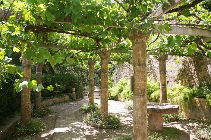 Tuinen - Pergola klimplant ...