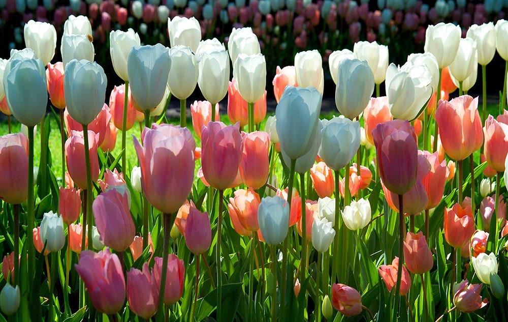 op zoek naar tulpen voor in de tuin plaats een tuinposter. Black Bedroom Furniture Sets. Home Design Ideas