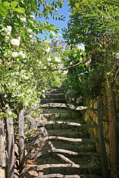 Hek met trap naar boven en struikgewas for Trap naar boven